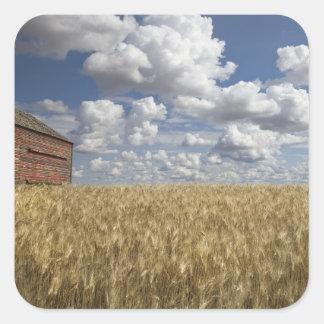 Old Barn in Wheat Field 2 Square Sticker