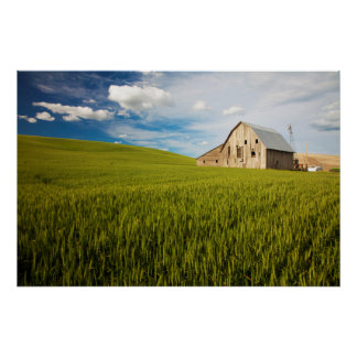 Old Barn Surrounded by Spring Wheat Field 2 Poster