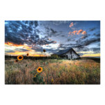 Old Barn with Sunflowers at Sunset - Hi Res Photo