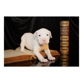 Old Bible, New Puppy Print