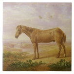 Old Billy, a Draught Horse, Aged 62 (oil on panel) Ceramic Tile