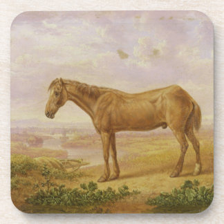 Old Billy, a Draught Horse, Aged 62 (oil on panel) Coaster