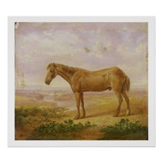 Old Billy, a Draught Horse, Aged 62 (oil on panel) Poster