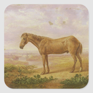 Old Billy, a Draught Horse, Aged 62 (oil on panel) Stickers