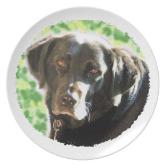 Old Black Labrador Photo Gifts you can personalise Melamine Plate