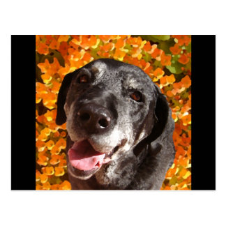 Old Black Labrador Postcard