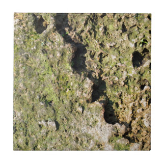 Old boulders with moss tile