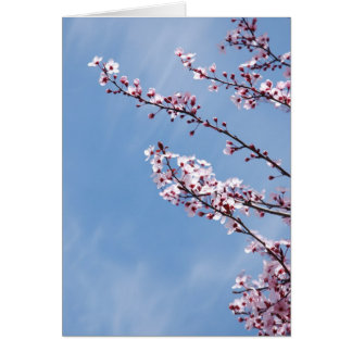 Old Branches - New Flowers Card