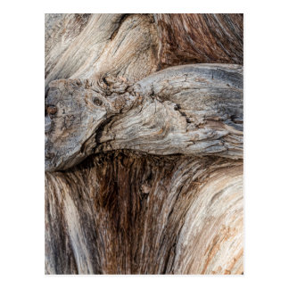 Old Canyon Tree Texture Postcard