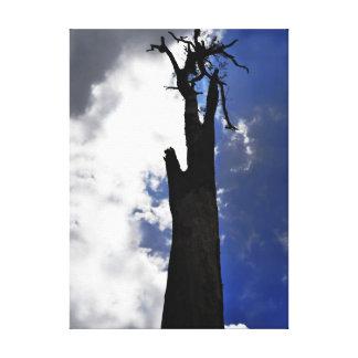 Old dead tree against dark cloudy sky canvas print