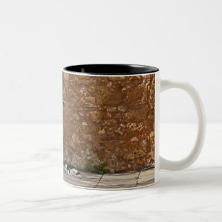 Old door and resting cat Two-Tone coffee mug