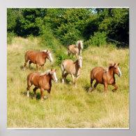 Old Draft Horses Print
