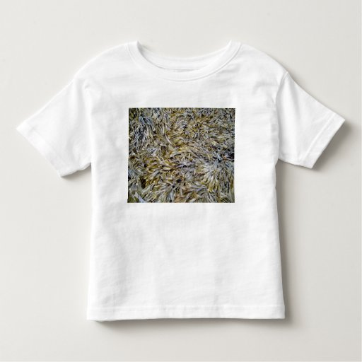 Old Dry Leaves Texture Shirts