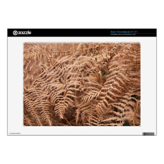Old Dry Yellow Brown Fern - Foliage Photography Acer Chromebook Decals