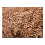 Old Dry Yellow Brown Fern - Foliage Photography Postcard