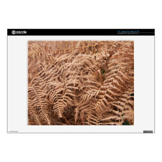 Old Dry Yellow Brown Fern - Foliage Photography Skins For Laptops