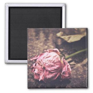 Old dryed vintage pink rose macro shot photo 2 inch square magnet