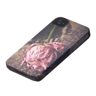 Old dryed vintage pink rose macro shot photo iPhone 4 covers