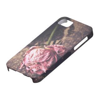 Old dryed vintage pink rose macro shot photo iPhone SE/5/5s case