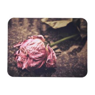 Old dryed vintage pink rose macro shot photo rectangular photo magnet