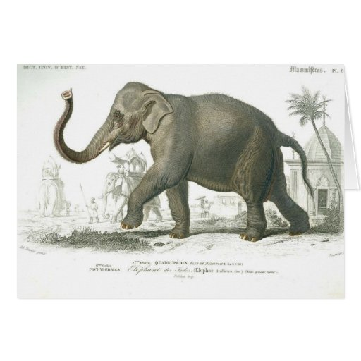 old elephant greeting card