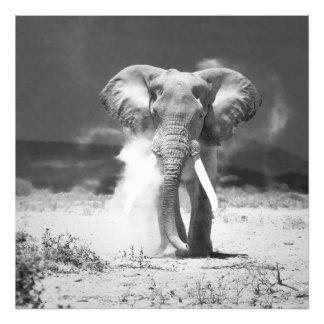 Old Elephant Photo