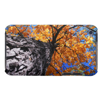 Old elm tree in the fall barely there iPod cover