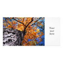 Old elm tree in the fall card