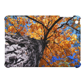 Old elm tree in the fall case for the iPad mini