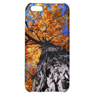 Old elm tree in the fall cover for iPhone 5C