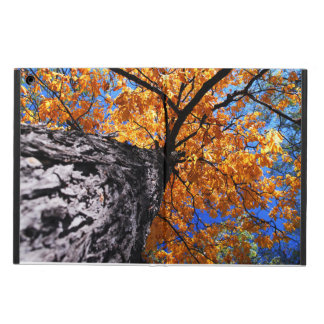 Old elm tree in the fall iPad air cover