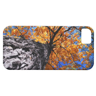 Old elm tree in the fall iPhone SE/5/5s case
