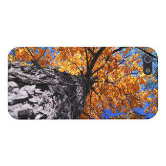 Old elm tree in the fall iPhone SE/5/5s cover