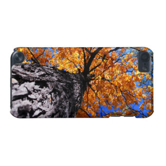 Old elm tree in the fall iPod touch (5th generation) cover
