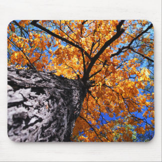 Old elm tree in the fall mouse pad