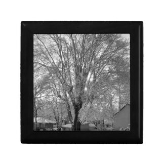 Old Elm Tree Photo Giftbox Jewelry Box