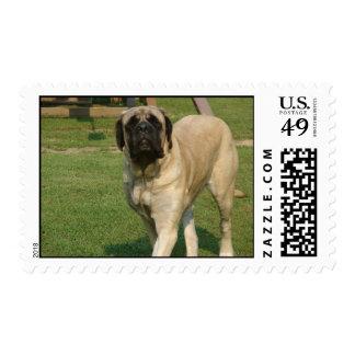 Old English Mastiff Stamp