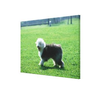 Old English Sheep Dog 2 Canvas Print