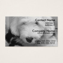 Old English Sheep Dog Business Card