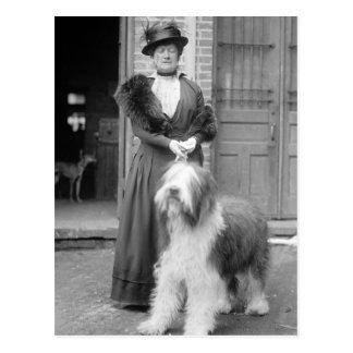 Old English Sheepdog, 1915 Postcard