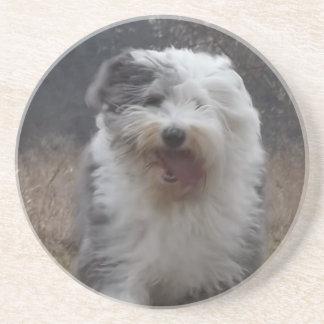Old English Sheepdog Coaster - Run Dog!