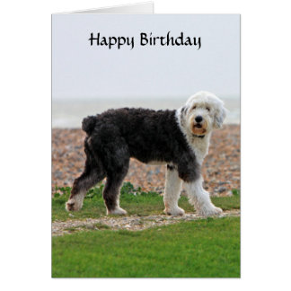 Old english sheepdog birthday cards more