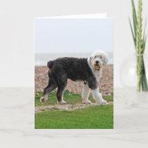 Old English Sheepdog dog blank note card, photo Card