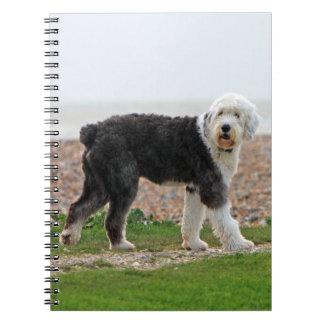 Old English Sheepdog dog notebook, beautiful photo Notebook