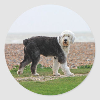 Old English Sheepdog dog stickers, gift Classic Round Sticker