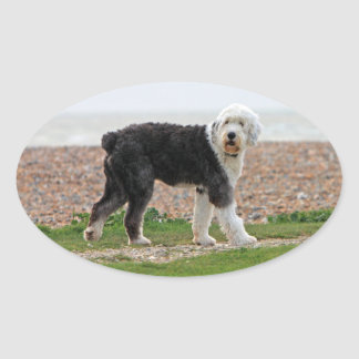Old English Sheepdog dog stickers, gift Oval Sticker