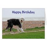Old English Sheepdog happy birthday card