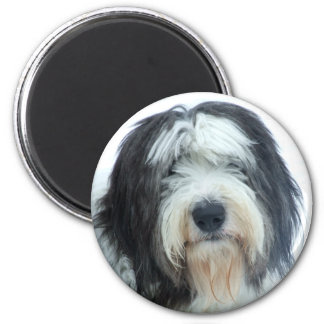 Old English Sheepdog Magnets