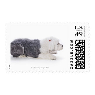 Old English Sheepdog on white background Postage Stamps