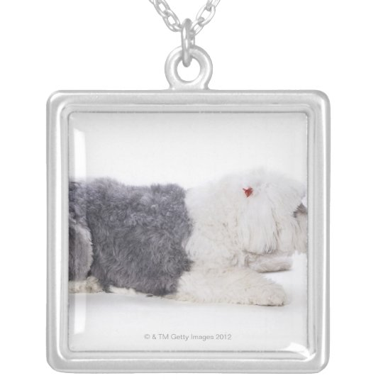 Old English Sheepdog on white background Silver Plated Necklace